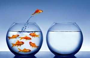 Goldfische im Glas